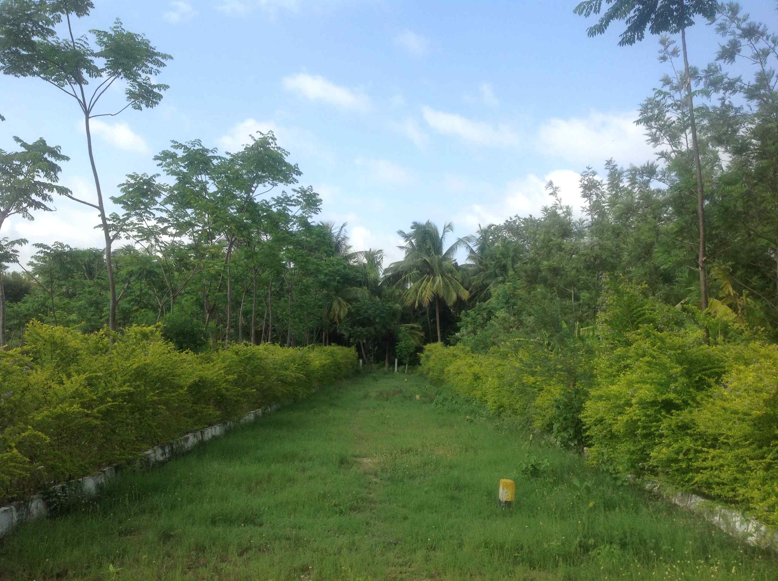 Farmland for sale-greenwoods-plantation project-land for sale near me-real estate Bangalore